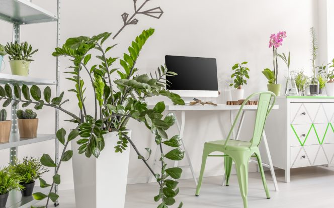 Indoor plants need care to give care when we retreat deeper into our homes. A survival guide to keep them glowing.